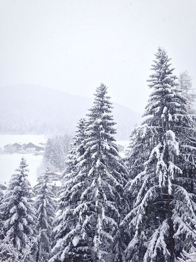 Snow covered trees on field during foggy weather