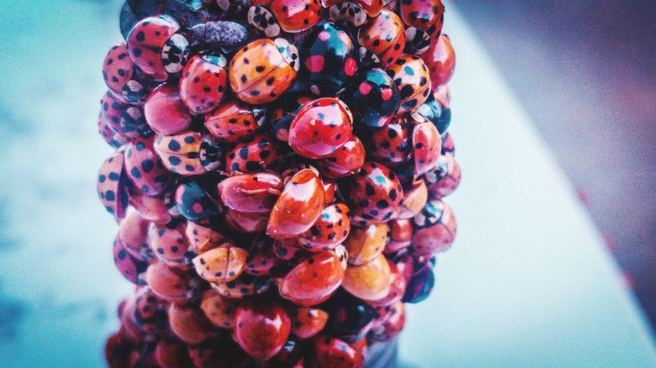 #ladybugs #lgv30 Ladybug LG V30 Bug Closeup Multi Colored Close-up