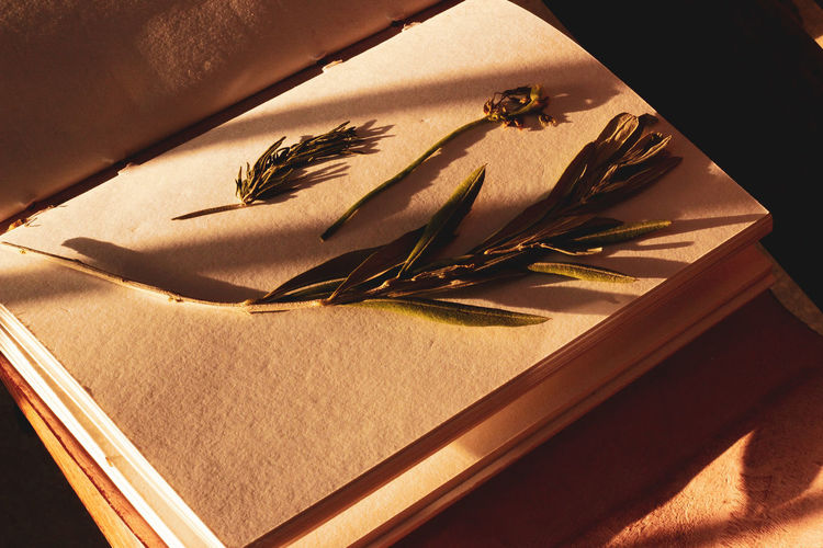 trinkets from Greece EyeEmNewHere Mykonos,Greece Mykonos Greece Olives Olive Tree Olive Leaves Diary Parchment Sunlight Sunlight And Shadow Shadows Open Book  Empty Book Outdoor Angled Shot Close-up Shadow Long Shadow - Shadow