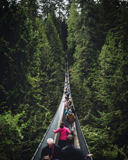High angle view of people on footbridge in forest