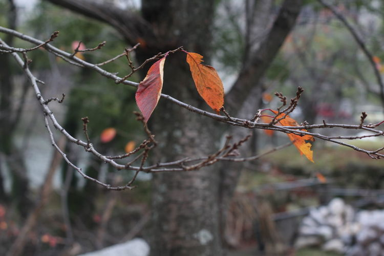Close-up of tree during autumn