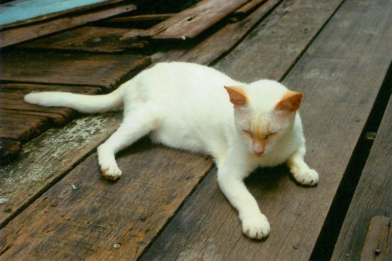 Cat lying on wooden floor