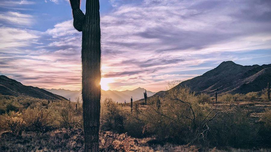 Sonoran desert sunset south mountain municipal preserve estrella mountains saguaro cactus