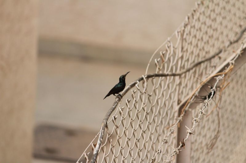 Animals In The Wild Bird Animal Themes Animal Wildlife One Animal Perching Day No People Outdoors Nature Close-up