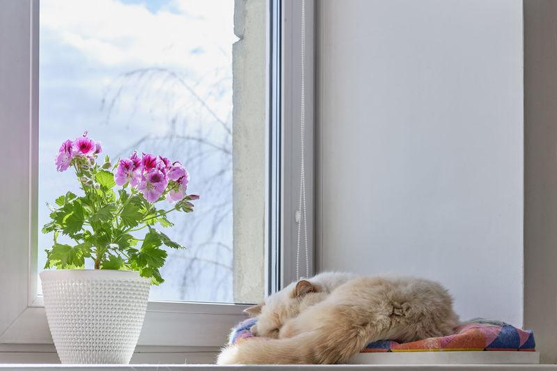 Cat relaxing on window sill