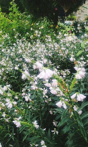 Field Of Flowers Somerville Nj Nature Purple Flower Many Flowers To Enjoy Trishann Artlovelaughter