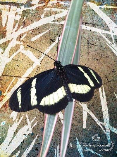 Butterfly Insect Insect Photography Nature Nature Photography Photographyart Art Blackandwhite Colors