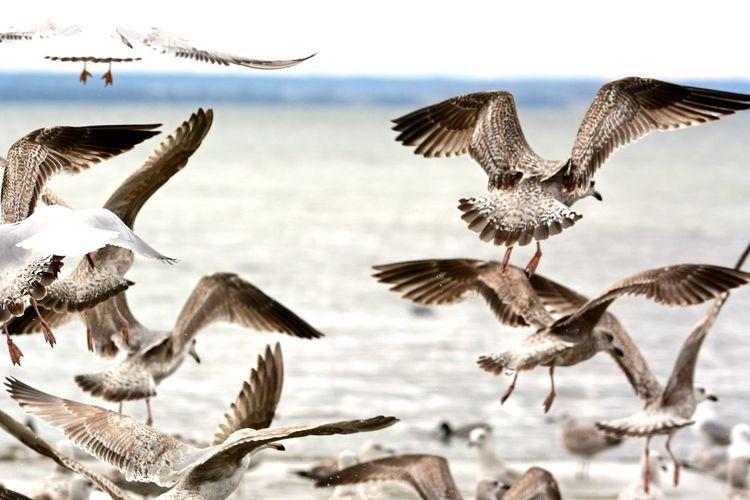 Photography Birds Poland Sea Baltic Sea Beach