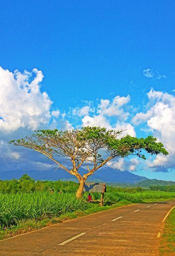 one fine day! Beautiful Surroundings Eye4photography  Eyeem Philippines Onlyinthephilippines