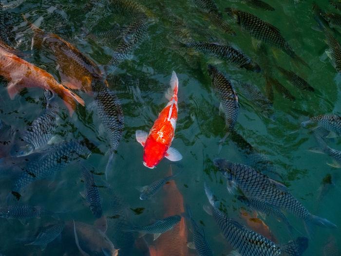 Sea Life Water