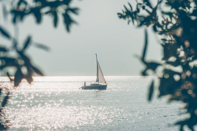 Alpine Lake Iseo. Olive branches with ripe olives Iseo Alps Beauty In Nature Horizon Over Water Iseo Lake Lake Landscape Nature Nautical Vessel No People Olives Olives Trees Outdoors Plant Reflections Sailboat Sailing Scenics - Nature Tranquil Scene Tranquility Transportation Tree Water