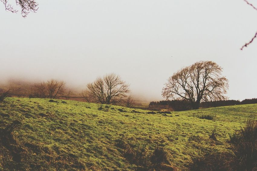 Grass Tree Nature Tranquility Landscape Beauty In Nature Tranquil Scene No People Outdoors Day Sky Rural Scene Green Color Lancashire Foggy Pendle Hill My Year My View Lush - Description Tranquility Nature Fog Mist Misty Witches Trees