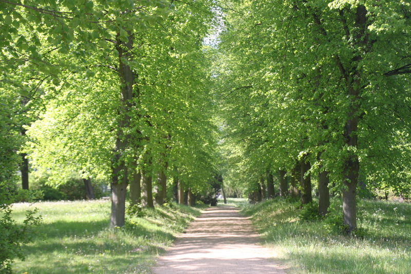 Havelradweg Beauty In Nature Branch Day Field Grass Green Color Growth Landscape Nature No People Outdoors Rural Scene Scenics Summer The Way Forward Tranquil Scene Tranquility Tree Tree Alley