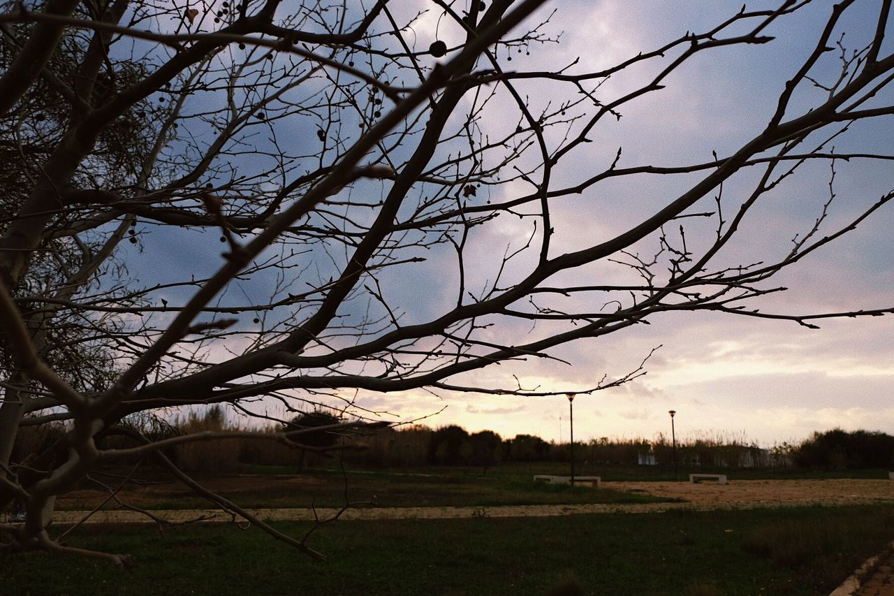 BARE TREES ON FIELD AGAINST SKY AT SUNSET
