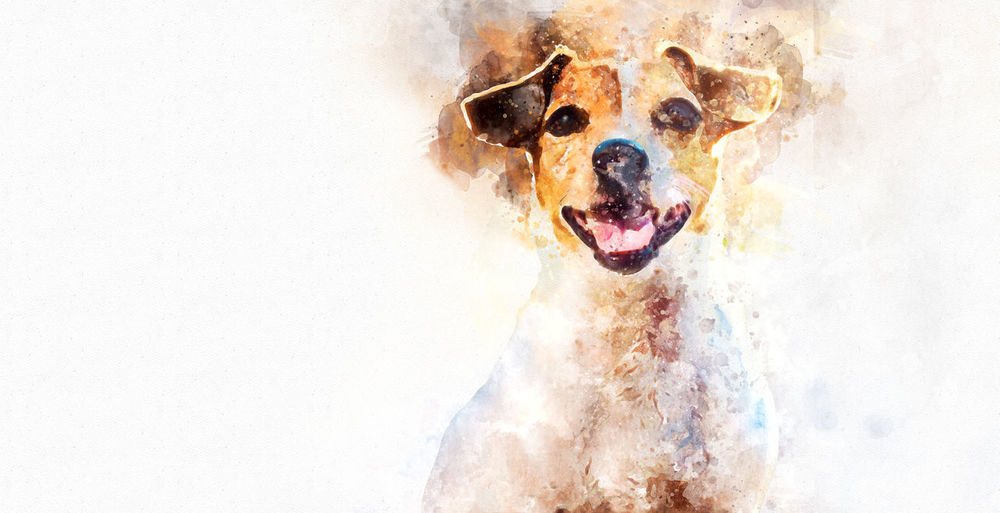 Digital watercolor painting of Jack Russell Terrier dog 2018 Beautiful Digital Watercolor Jack Russell Terrier Positive Animal Animal Themes Beauty Cute Digital Art Dog Friend Friendly Illustration Little Lovely Muzzle One Animal Portrait Pretty Puppy Purebred Dog Small Terrier Year Of The Dog