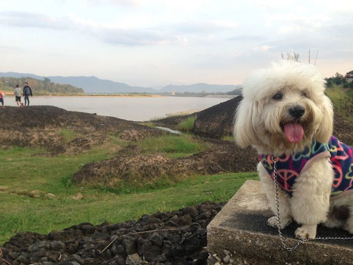 Dog sitting on landscape with lake in background