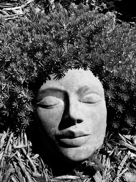 Showcase July art in the garden ..😎 Takiing Pictures Garden Close-up Backyard Outdoors Outdoor Photography From Where I Stand Blackandwhite Black And White Black & White Blackandwhite Photography Black&white Black And White Photography Blackandwhitephotography Black And White Collection  Blackandwhitephoto Bnw Bnw_collection Bnw_captures Bnw_life Summertime Summergarden Claysculpture Art