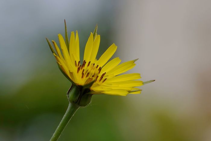 Gelbe Blüten Flowering Plant Flower Yellow Fragility Vulnerability  Plant Beauty In Nature Freshness Close-up Petal Flower Head Growth Inflorescence Nature Focus On Foreground Pollen No People Plant Stem Insect Outdoors