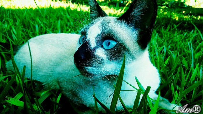 My cat photo Am®
