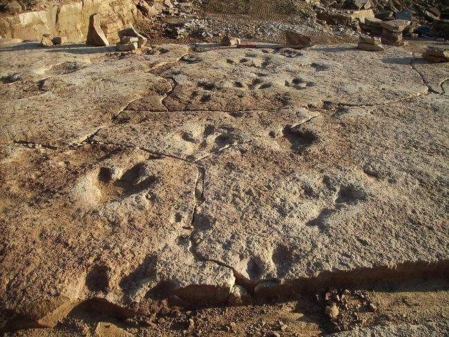 Dinosaurier  Dinosaurierfährten In Den Obernkirchener Sandsteinbrüchen Dinosaurierspuren Dinospuren Outdoors Raptoren Theropoden Break The Mold