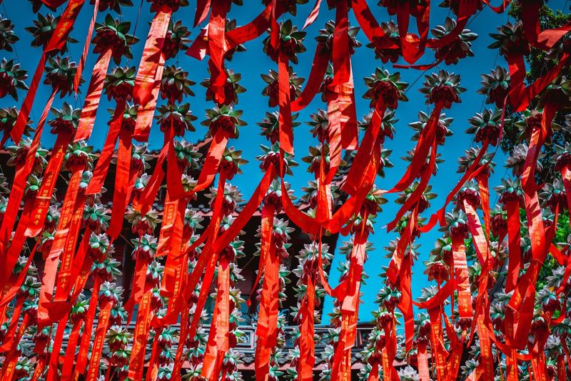 Low angle view of red flowering plants