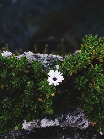 💭 Flower Head