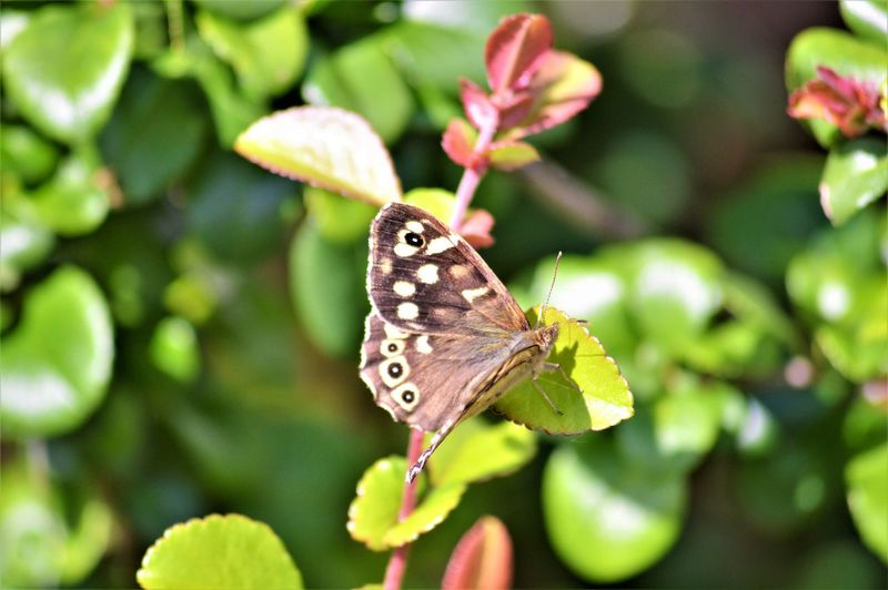 Blurred Butterfly ❤ Focus Object Landing Leaves🌿 Beauty In Nature Natrualbeauty Outdoor Photography Pretty Colours