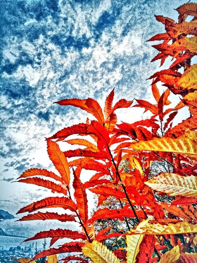 Nature Red No People Growth Close-up Beauty In Nature Day Indoors  Nature EyeEm Gallery EyeEm Best Shots EyeEm Best Edits Eyes4photography Autunnodigitale Autumn🍁🍁🍁 Autunno Autumn Colors Colori Landscape Paesaggio Autunno  Autunno Artistico Autunno