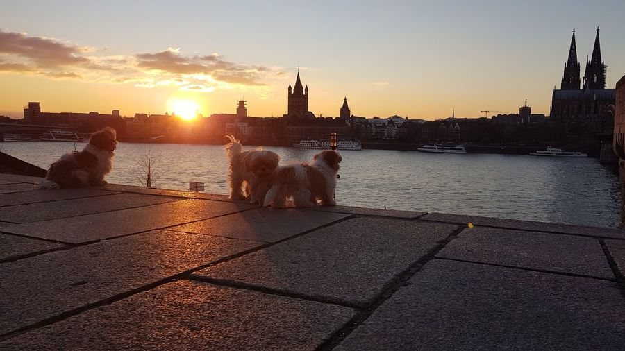 View of dogs in city during sunset