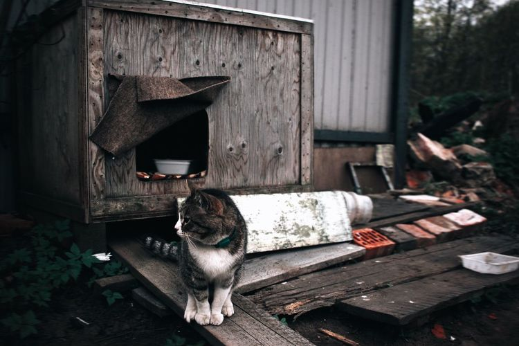 Old cat guarding a ruined mansion
