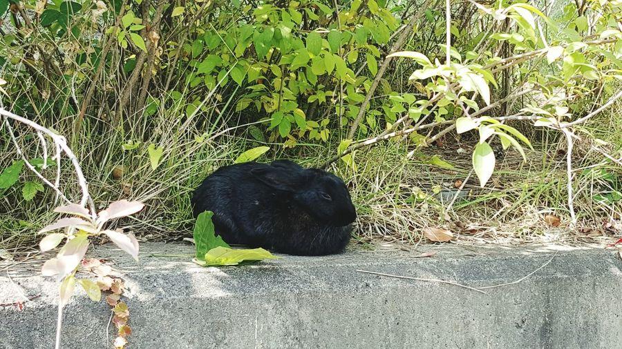산책중 몹이랑 마주침 토끼