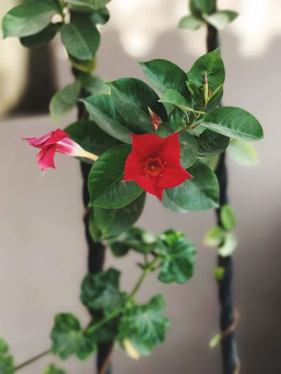 🌹 Red Plant Flower