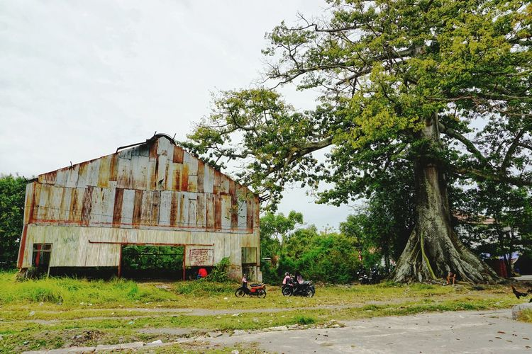 Randu Gede. Oldplant Heritage Site Heritage Tree Sky Architecture Grass Building Exterior Built Structure Growing