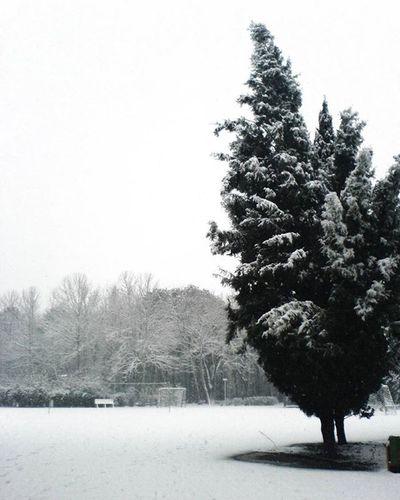 هوای دهکده سرد است، برف میبارد، به گردنم برسان شال گرم گیسو را (علی محمد محمدی) علی محمد محمدی برف زمستان  شال گرم گیسو دهکده سرد سرما شعر ترانه هوا عکاسی Winter Snow Tree Love Poetry Lyrics Photooftheday Photo Photographer Photographyislifee
