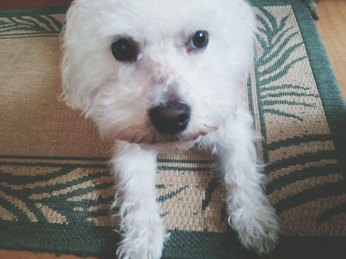 🐕🐶🐩 Dog❤ Dog Love Okay.