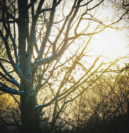 Sunset Snowy Tree Snow And Sun Copy Space The Week Of Eyeem Landscape Abstract Pastel Power