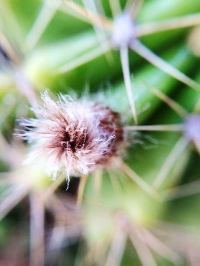 Cacto Nature Plant Beauty In Nature No People Close-up