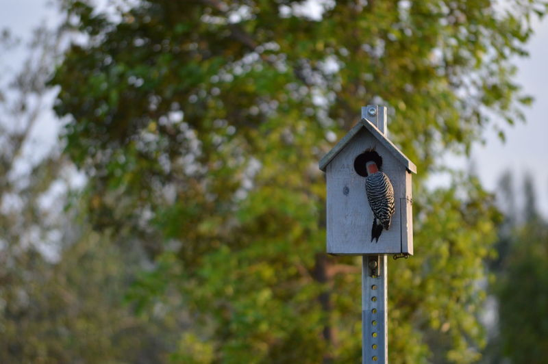 EyeEm Selects Tree No People Forest Road Sign Outdoors Focus On Foreground Day Tree Area Leaf Close-up Sky Nature Red Bellied Woodpecker Bird Birdhouse Female Red Headed Woodpecker No Edits No Filters Lee County, Florida