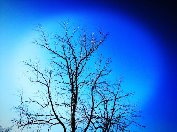 Clear Sky Blue Bare Tree Nature Beauty In Nature Day