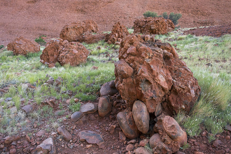 Boulder Aboriginal Land Bedrock Red Rock Rock Formation Animal Beauty In Nature Brown Day Environment Fallen Rocks Field Geology Grass Land Landscape Monolith Nature No People Outdoors Plant Rock Rock - Object Sandstone Rocks Solid
