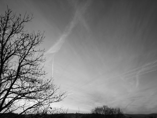 Sky Low Angle View Nature Outdoors Beauty In Nature No People Day Sun Bw Blackandwhite Grey Grey Sky