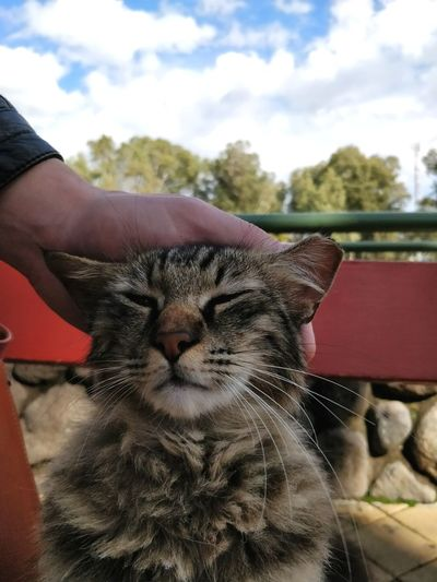 Close-up of hand with cat against sky