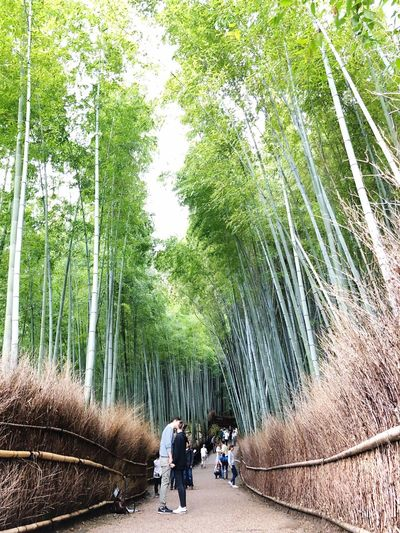 Couple kissing while standing on footpath amidst bamboo grooves