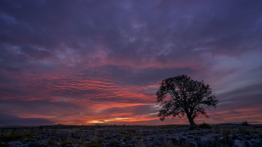 Silhouette tree on landscape against sky during sunset