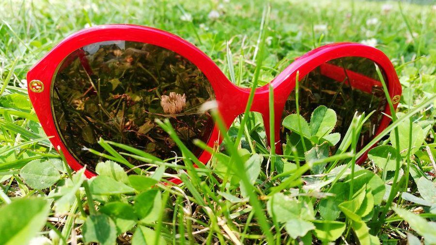 Sunglasses Grass Green Color Red Close-up Sunglasses👓 Sunglasses Sonnenbrille Rot Grün Lunettes De Soleil