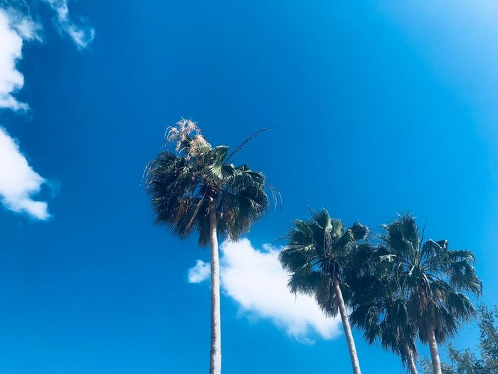 be free Warm Summer Blue Sky Blue Aesthetic EyeEmNewHere Photography EyeEm Selects Sky Plant Low Angle View Blue Tree Nature Sunlight Coconut Palm Tree Beauty In Nature Palm Tree Outdoors