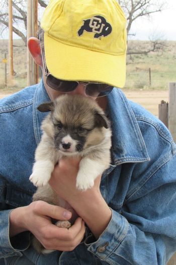 Teenage boy carrying pembroke welsh corgi puppy