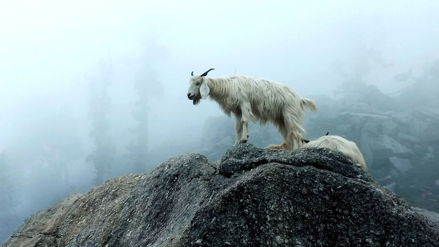 Low angle view of goat standing on rock against sky