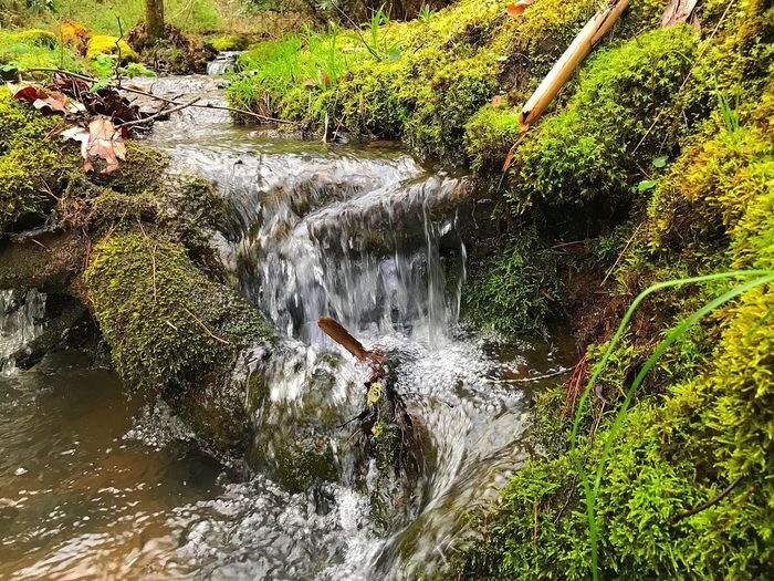 Water Nature High Angle View Day No People Plant Outdoors Beauty In Nature Green Color Motion Sunlight Reflection Growth Lake Wet Land Tranquility Waterfront Flowing Water Full Frame