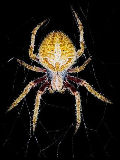 Spider Symmetry